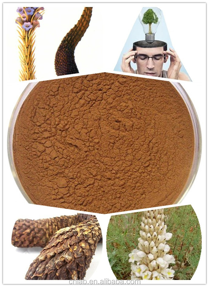 Cistanche tubulosa extract powder,verbascoside,echinacoside,total saponins