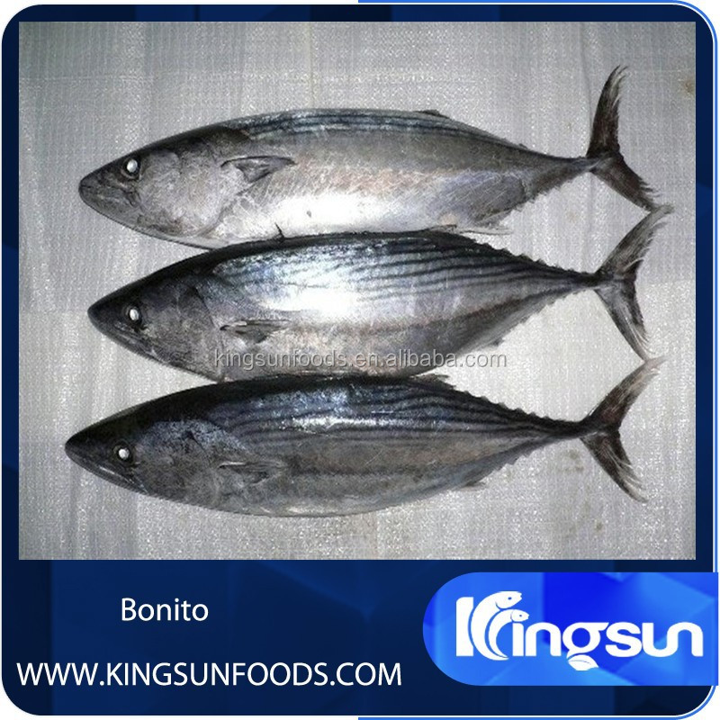 Frozen Fresh Bonito Tuna Fish Price