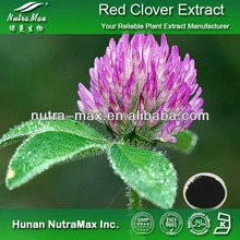 China Manufacturer 8% Isoflavones Red Clover Extract For Antibiotic