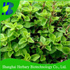 Shanghai Herbary supply herb seeds marjoram seeds for planting