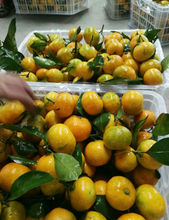 Fresh Mandarin <strong>Orange</strong> with leaves from China