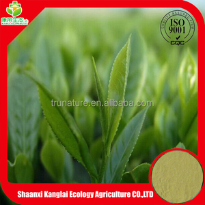 100% Pure natural Green Tea Extract with high percentage EGCG by HPLC