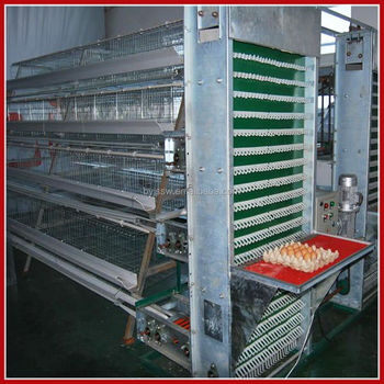 Automatic Egg Collection System