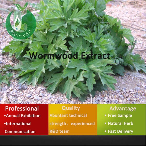 Export Medicinal Herbs Sweet Wormwood Extract Sweet Wormwood powder