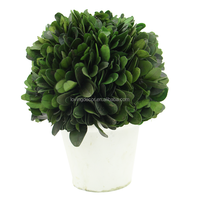 Natural Preserved Boxwood Topiary Small Ball Decoration