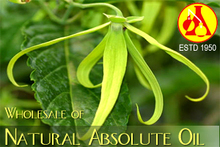 Organic Natural Hops Absolute-100% Pure Plant Oil