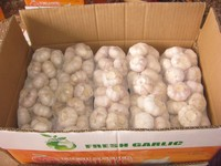 China Natural Garlic ( new crop)