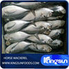 Fresh Material Indian Mackerel Fish On Sale