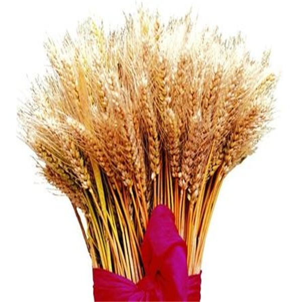 lowest price of Imp&Exp wheat from Russia