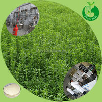 Organic stevia leaves extract stevioside in bulk