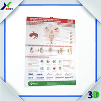 Custom 3D Medical Anatomical Plastic Chart/Pharmaceutical Promotional Gift