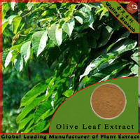 Olea Europaea (Olive) Fruit Extract