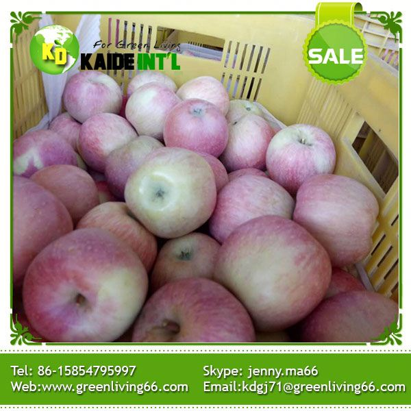 top bulk fresh red fuji apples