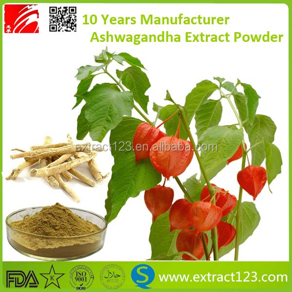 Factory Supply Withanolid 1% 5% Ashwagandha Extract