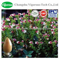 Natural Eyebright Herbal Extract / Euphrasia officinalis powder