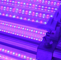 90~130Lm/W Video Led Tube 8 Light Www.Xxx.Com T8 Blue/Red Led Plant Grow Light Tube