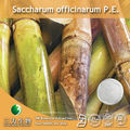 100% Natural Saccharum officinarum P.E. ( 90-95% Policosanol, 60% Octacosanol )