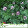 2017 Trifolium pratense seeds/Red Clover seeds/lawn grass seed