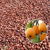 Best quality and best price high germination loquat seeds Eriobotrya Japonica