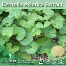 Top Quality Gotu Kola Extract 95% Asiatic Acid,95% Madecassic Acid ,CAS: 464-92-6