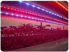 SLT grow box complete led light bar 84w super led lighting for indoor garden