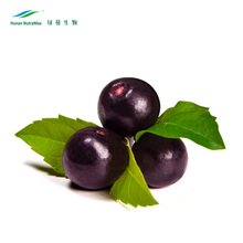 Natural Acai Berry P.E. 10:1 with Best Price