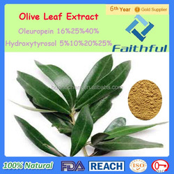 Manufacture Supply Olive Leaf Extract/ Olive Leaf Extract For Health/Antioxidant/