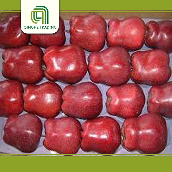 Hot selling fresh huaniu apple fruit for sale