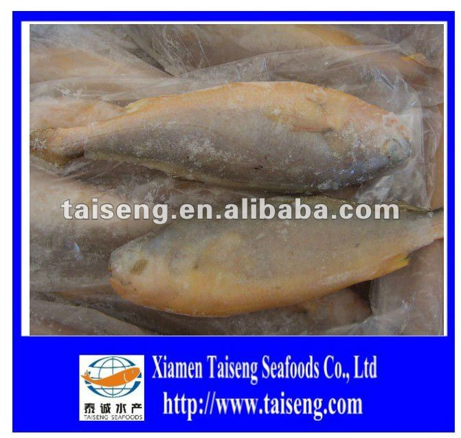 Whole Round Fresh Croaker Seafood Frozen Yellow Croaker