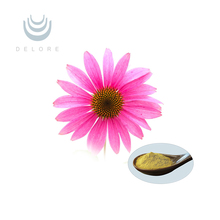new arrival organic echinacea extract powder cichoric acid 4%