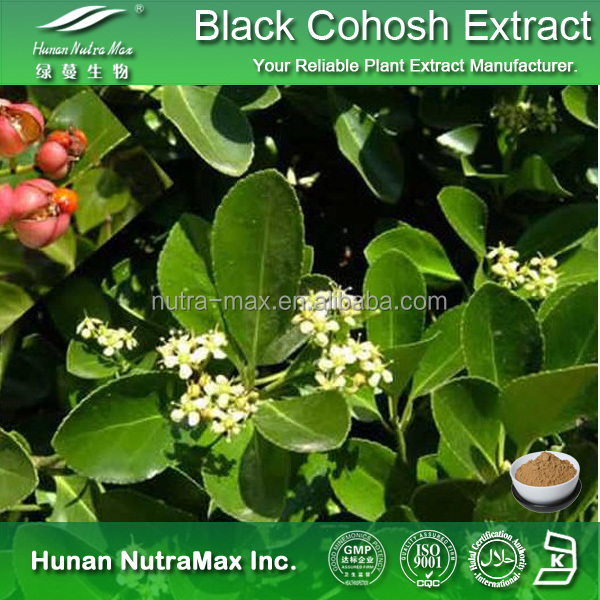 Online Shopping Medical food Black Cohosh Extract, Medical Black Cohosh Extract Powder, Black Cohosh Powder