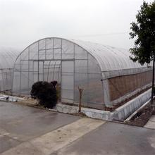 Cheap tunnel poly film greenhouse for vegetables