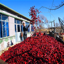 Neihuang dehydrated red hot pepper chillies factory