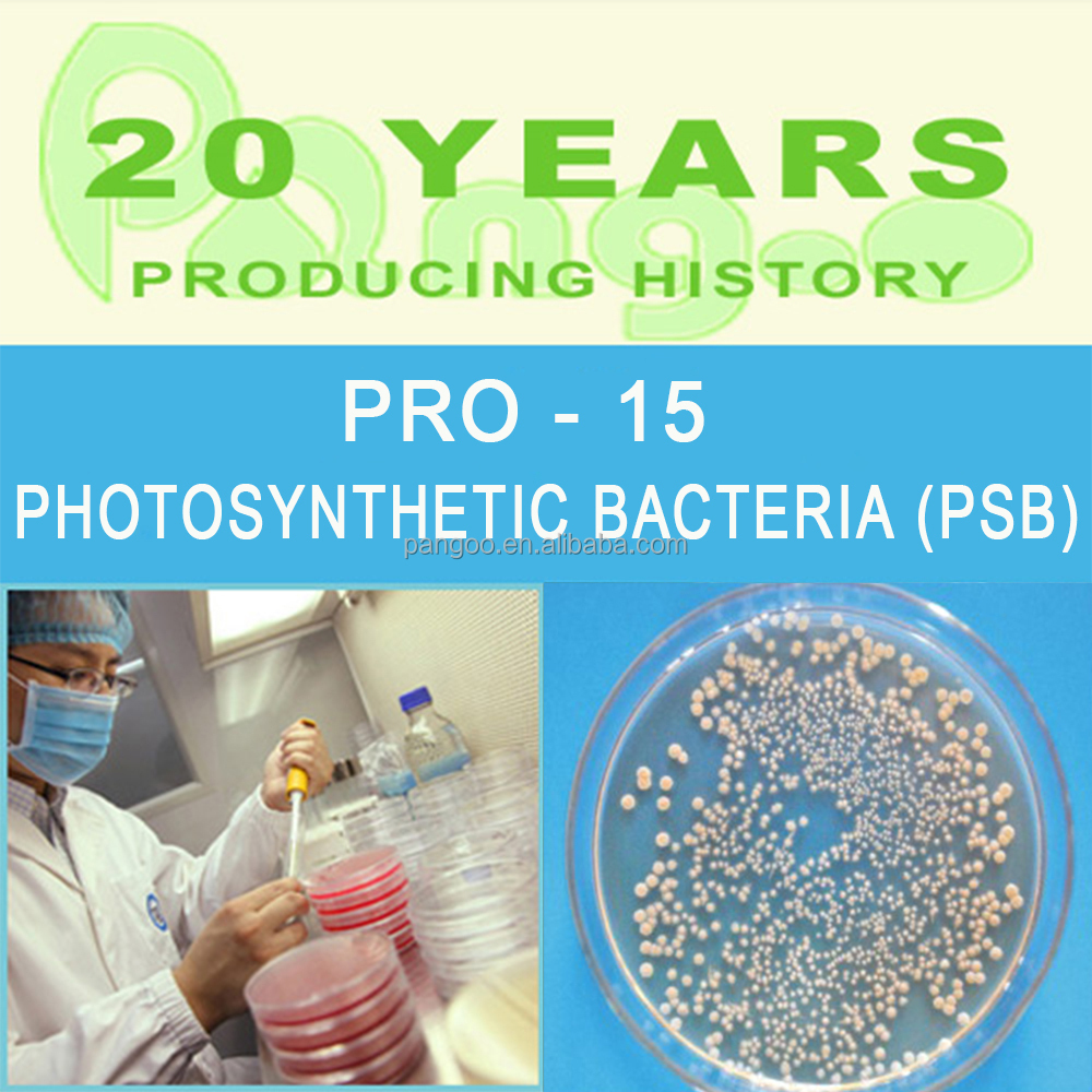 Aquatic animal feed additive probiotics for fish with photosynthetic bacteria and nitrite bacter