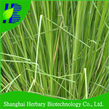 Fast growing khus grass seeds price