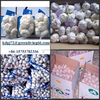 health food fresh organic garlic garlic importers and exporters