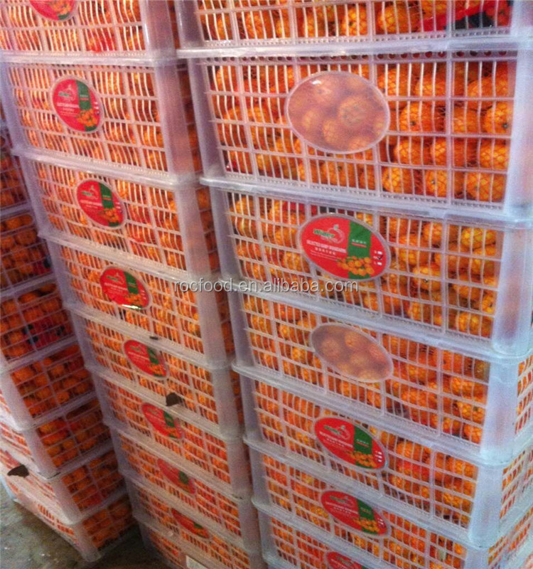 Common Cultivation Type and Mandarin Orange Type fresh quince fruits