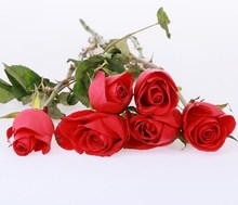Most popular hot sale fresh cut roses from ecuador directly from the farm