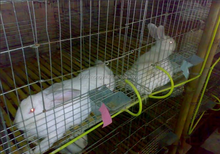 rabbit farm rabbit cages indoor/rabbit cages commercial/meat rabbit cages