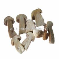 magic mushroom with high quality and competitive price