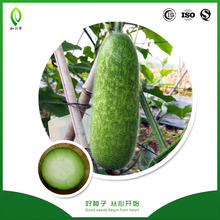 Early maturing Tangkue hairy gourd seeds for sale