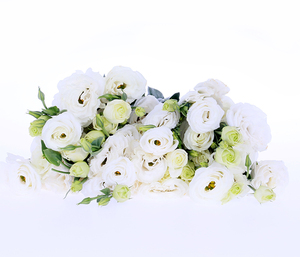 Natural Different Types Wholesale White Eustoma Qingyi Flower Fresh Cut Flowers
