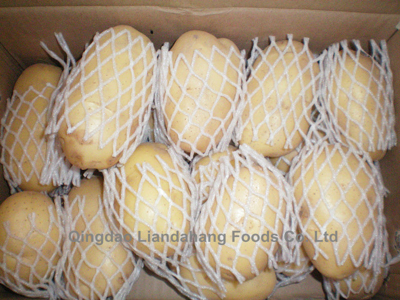 Certified HALAL/ GAP 2016 Crop FARM FRESH POTATO-Table Potato, Fries Potato