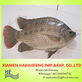China Export Frozen Fish Frozen Black Tilapia Buyer