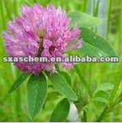 Total isoflavones 2.5%,8%, 20%,40%red clover herb extract