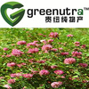 Offer superior quality Red clover extract 491-80-5