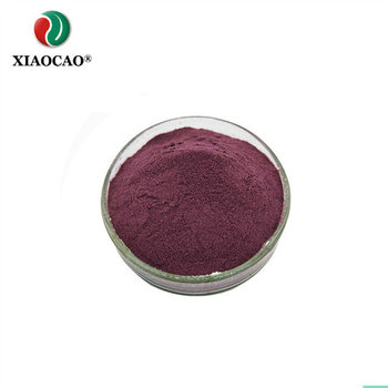 High quality natural Blueberry Powder