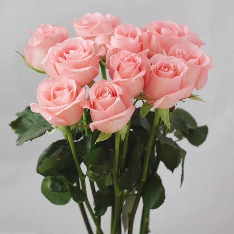 Dubai Fresh Flower Importers Natural Flowers Single Stem Cut Fresh Rose Selling
