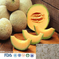 Best Price Natural cantaloupe extract