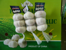 Professional supplier of New product bulk garlic for sale